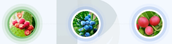 Diabetins Max - jakie składniki zawiera formuła kapsułek?