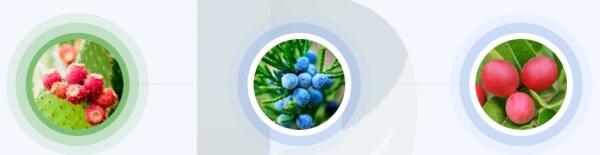Diaprin - jakie składniki zawiera suplement?